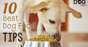 10 Best Dog Food Tips